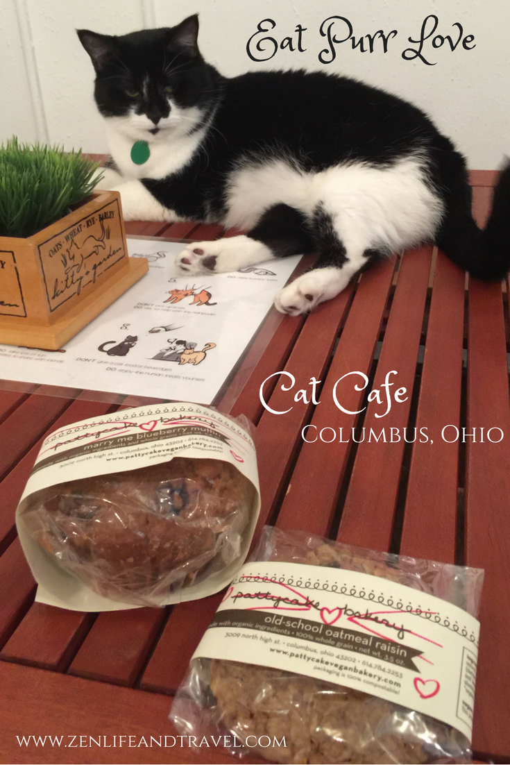 ciao cat treats